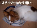 CIMG5511_.JPG