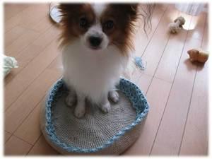 bagdog.jpg