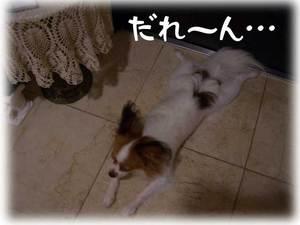 sisinobi.jpg